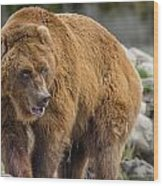 Very Big Bear Wood Print
