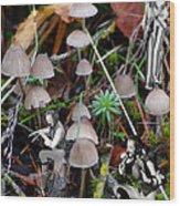Very Tull Mushrooms Wood Print