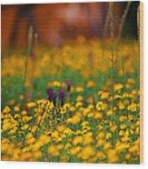Vesuvius Wildflowers Wood Print