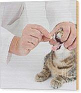 Vet And Kitten Wood Print