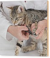 Vet Clipping Kittens Claws Wood Print