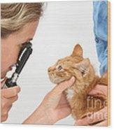 Vet Examining Kitten Wood Print