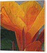 Vibrant Canna Wood Print