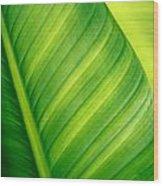 Vibrant Green Leaf Wood Print