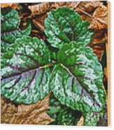 Vibrant Ground Cover  Wood Print