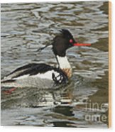 Vibrant Red Breasted Merganser At The Lake Wood Print