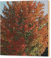 Vibrant Sugar Maple Wood Print