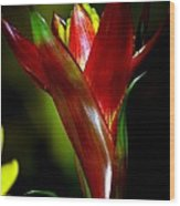 Vibrantly Rich In Red Wood Print