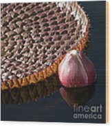 Victoria Amazonica Giant Water Lily Wood Print