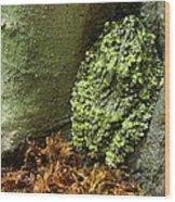 Vietnamese Mossy Frog Wood Print