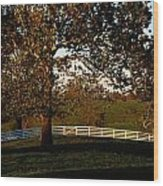 View Of A Large Sycamore Tree And White Wood Print