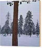 View Of A Ponderosa Pine Surrounded Wood Print