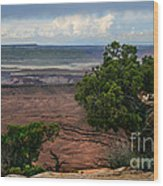 View Of Canyonland Wood Print