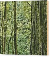 View Within A Rain Forest Wood Print