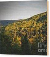 Vignette Of Autumn Gold  Wood Print