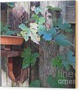 Vine And Feeder Wood Print