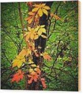 Vine Wood Print by Michael L Kimble