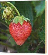 Vine Ripened Strawberry Wood Print