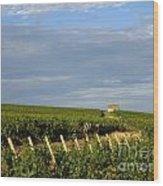 Vines In Burgundy. France Wood Print
