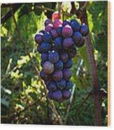 Vineyard 31 Wood Print