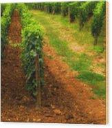 Vineyard In Burgundy France Wood Print