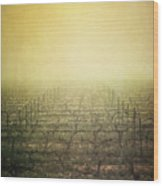 Vineyard In Mist Wood Print