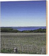 Vineyard Of Leelanau Michigan Wood Print