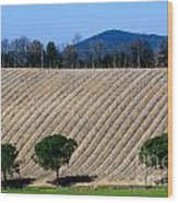 Vineyard On A Hill With Trees Wood Print