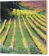 Vineyard Sonoma 7 Wood Print