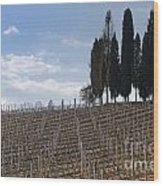 Vineyard With Cypress Trees Wood Print