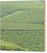 Vineyards Near St Emilion In The Mist Wood Print