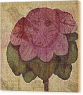 Vintage Cabbage Wood Print by Bonnie Bruno