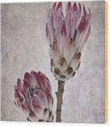 Vintage Proteas Wood Print