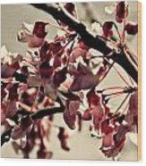 Vintage Redbud Wood Print