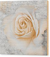 Vintage Rose II Wood Print