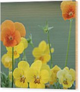 Violas Wood Print