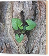 Violet And Oak Wood Print