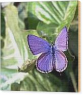 Violet Butterfly Wood Print