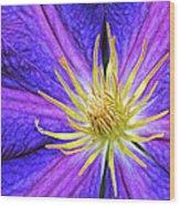 Violet Clematis Wood Print