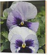Violet Pansies Flower Wood Print