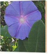 Violet Star Wood Print