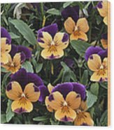 Violets Wood Print by Archie Young