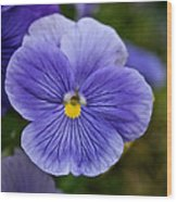 Violets Are Blue Wood Print