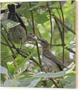 Vireo And Cowbird Wood Print