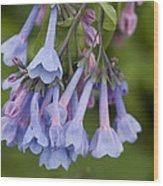 Virginia Blue Bells Wood Print