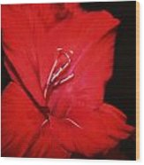 Vision Of Red Wood Print by Cathie Tyler