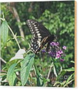 Visit From A Black Swallowtail Wood Print