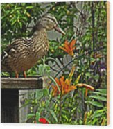 Visitor To The Feeder Wood Print