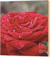 Viva Red Wood Print