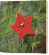 Vivid Star Wood Print